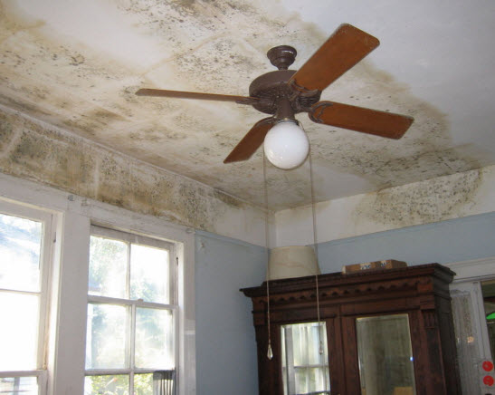 ceiling-mold